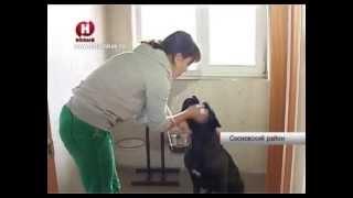 гостиница для животных Тамбов