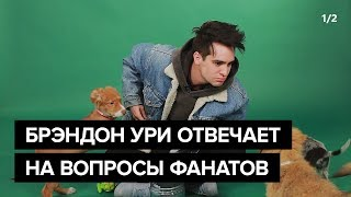 Брэндон Ури из Panic! At The Disco играет с песиками и отвечает на вопросы фанатов (1/2)
