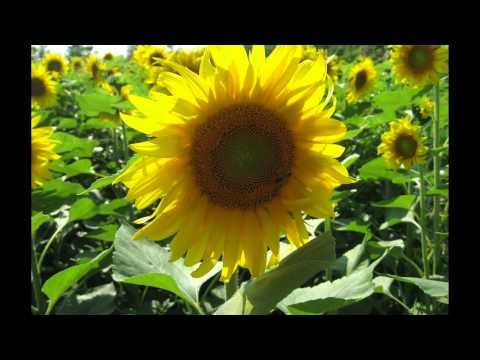 Karaoke HD 1 25 Tup Leu Ly Tuong www.bunbohuevida.com