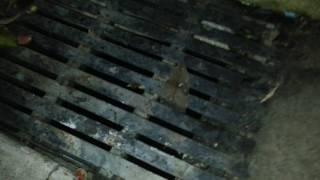 Звуки из канализации ночной Паттаи
