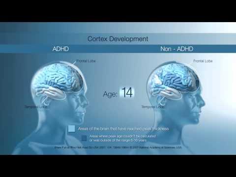biological and neurological foundatinos