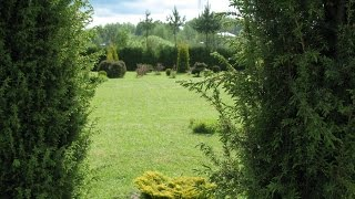 Хвойные в саду. Вечнозеленые растения. Ландшафтный дизайн.