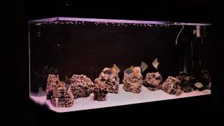 Brackish Water Aquarium | Mono Angelfish | Scat Fish | Orange Chromide | Mollies