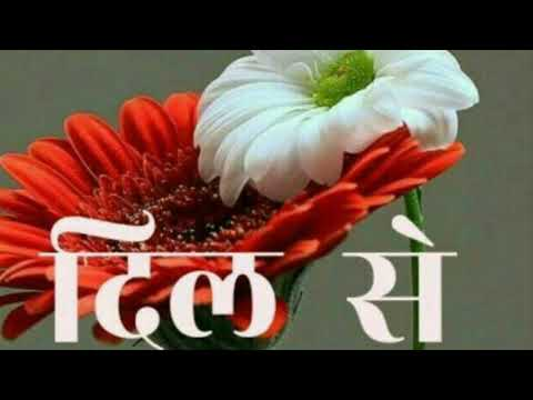 Good Morning WhatsApp Status Video