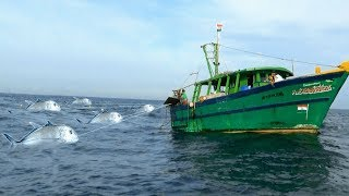 TREVALLY/PAARAI FISH CATCHING AT SEASHORE