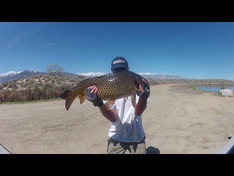 Owens Valley Fishing,,COVID-19