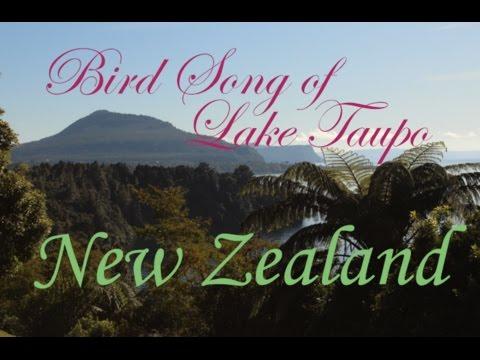 Lake Taupo Birds