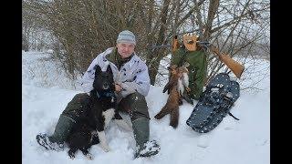 Охота с лайкой на куницу и белку 2017