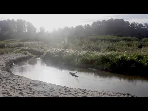 Clam Beach, CA - Enjoy, Relax, Study, Meditate - Morning Ocean Waves with Gentle Music
