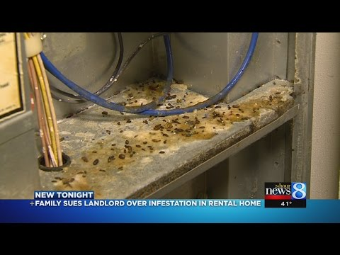 Who's responsible for rodents in rental property?