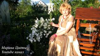 видео Наперстянка, дигиталис (Digitalis L.)