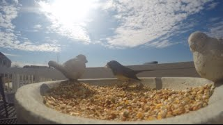 Gopro Hero 4 Black- Bird Feeder Timelapse