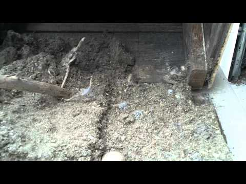 Cleaning Out An Owl House