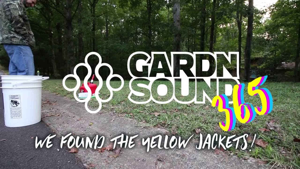 Kill yellow jackets in the ground - How To Kill Yellow Jackets With Gasoline