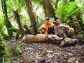 Public Land Red stag ROAR hunt New Zealand