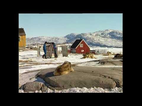 Illoqarfiga: Ilulissat, KNR 1997