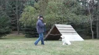 Grace (golden Retriever) Puppy Camp Training Minneapolis