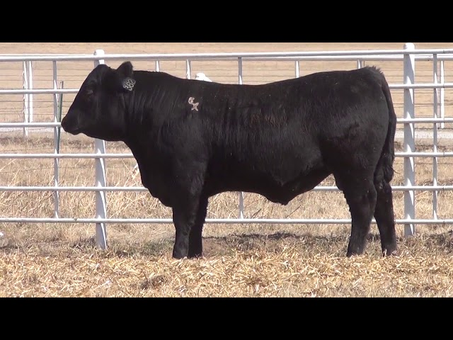 Express Ranches Lot 382