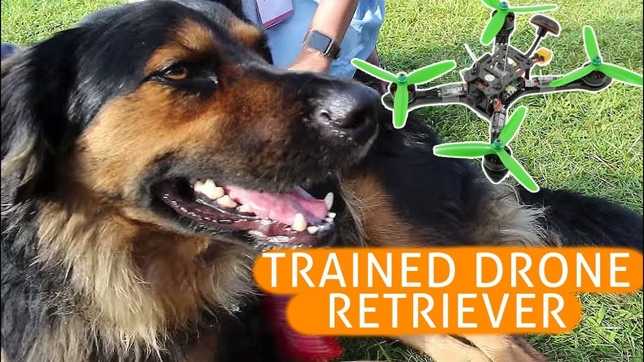 DRONE RETRIEVER DOG AT DRONE NATIONALS IN NEW YORK