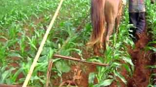 carpideira de tração animal