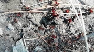 Война муравьёв 3