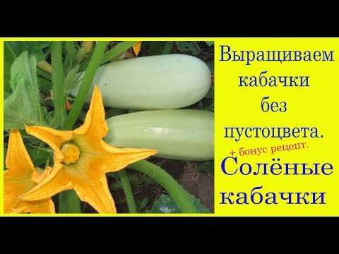 Выращиваем кабачки без пустоцвета. Соленые кабачки. Выпуск 236