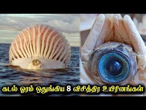 கடல் ஓரம் ஒதுங்கிய 8 விசித்திர உயிரினங்கள்! | Crazy Talk