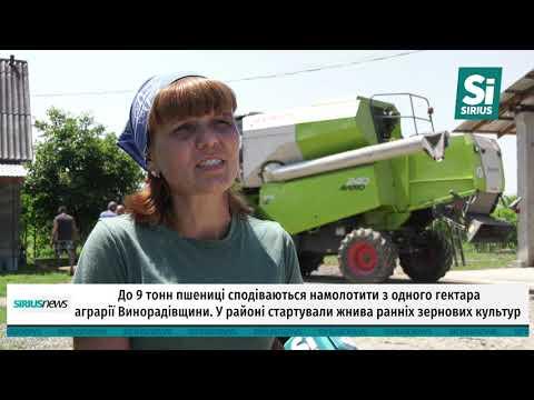 До 9 тонн пшениці сподіваються намолотити з одного гектара аграрії Винорадівщини