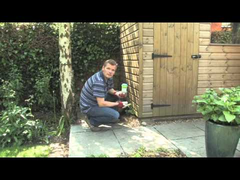 Getting Rid Of Weeds In Your Gravel Patio Shed