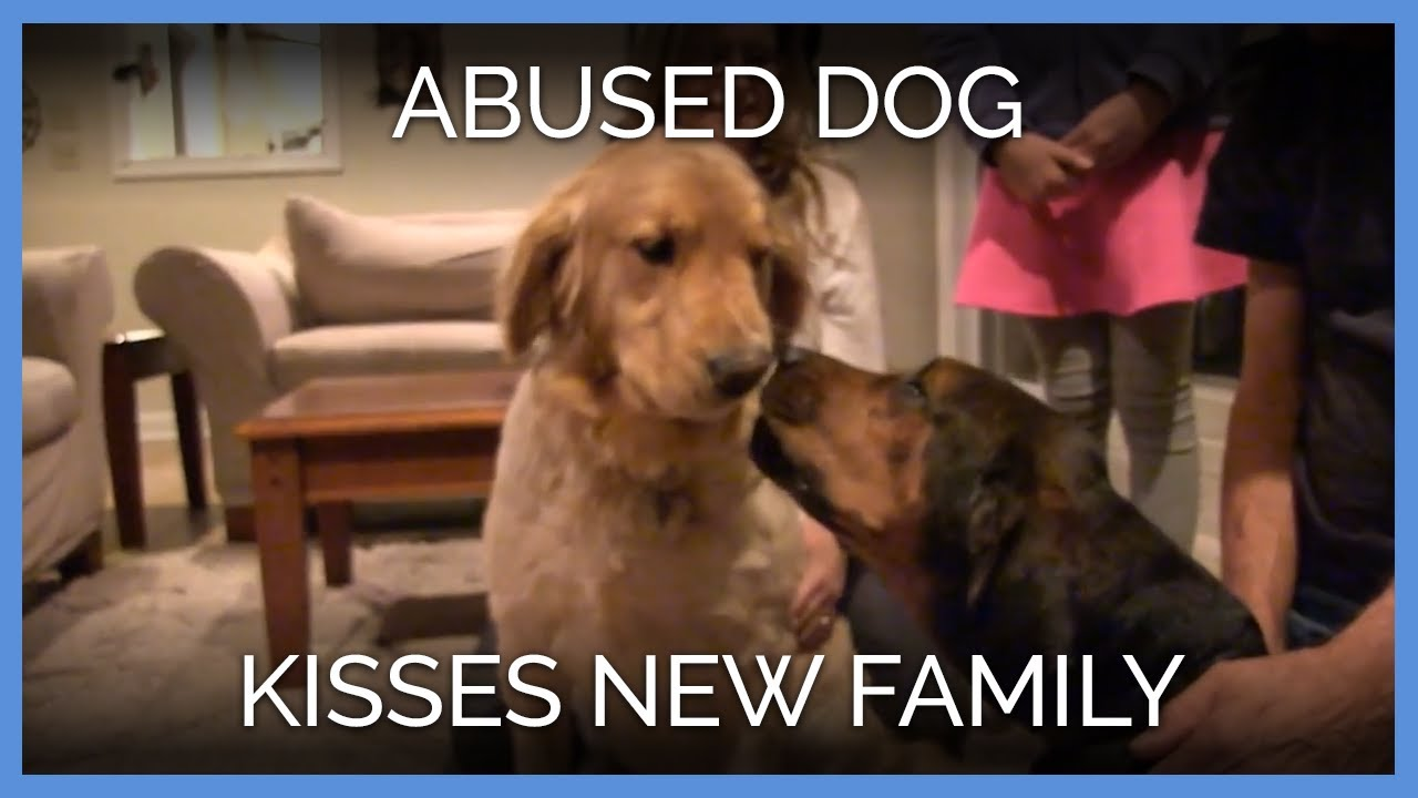 Abused Dog Kisses New Family Peta Animal Rescues