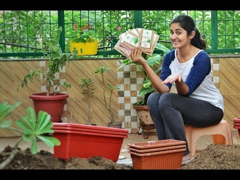 Easy Vegetables You Must Grow At Home
