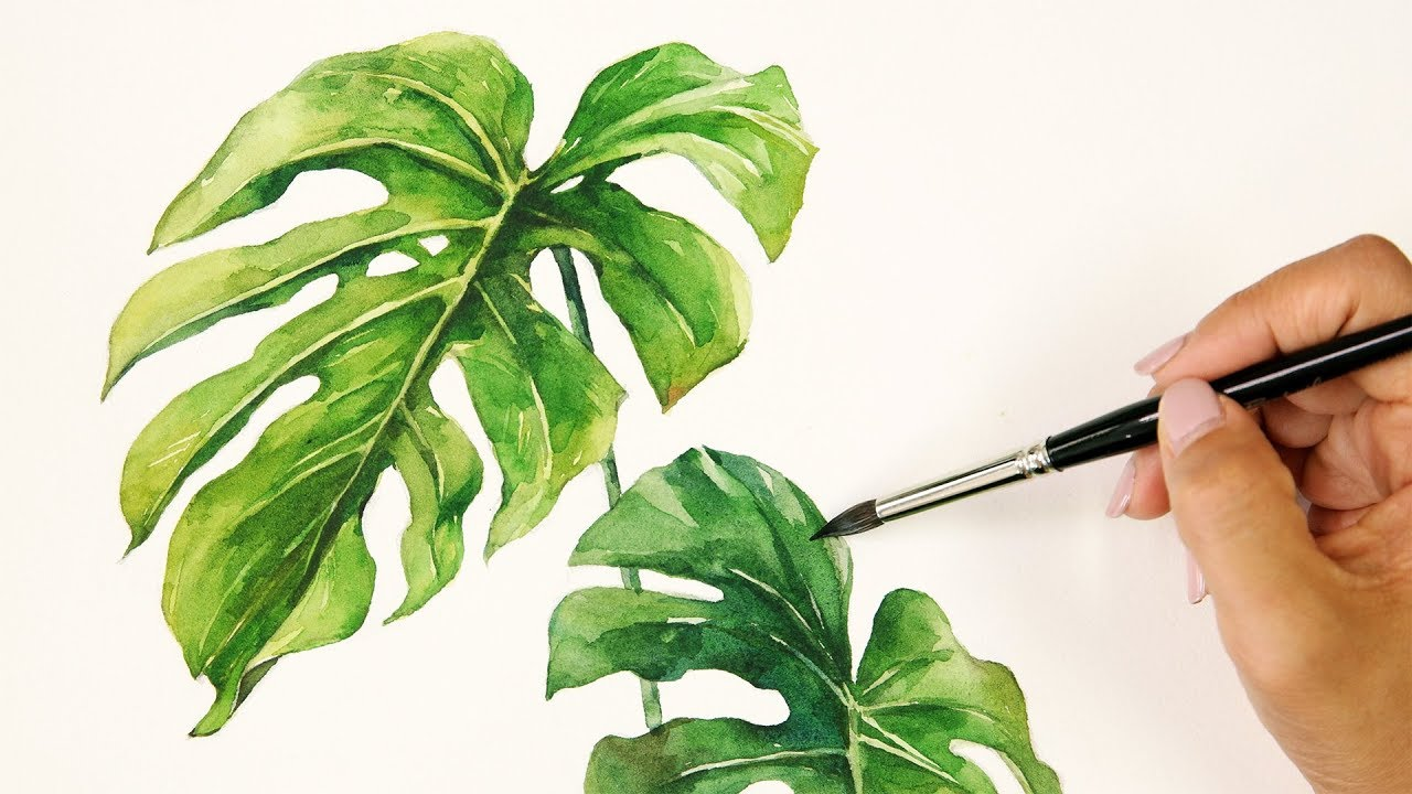 Watercolor Painting   Monstera   YouTube   Watercolor plants ...