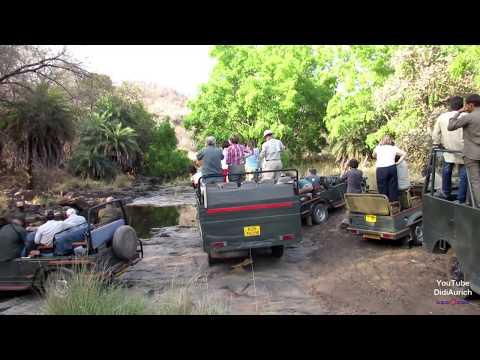 tiger-safari-ranthambore-national-park-sawai-madhopur-rajasthan-india-ranthambhore-nationalpark