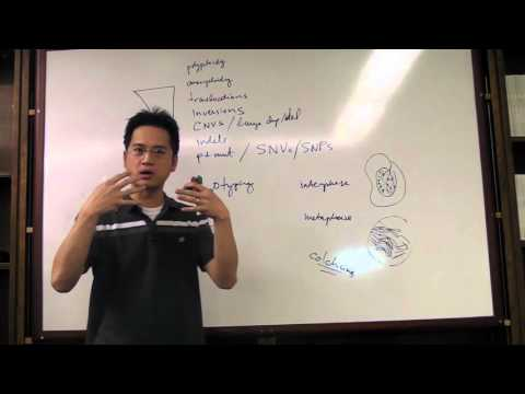 Molecular Video Lecture 02 (Variant Sizes, Cytogenetics, FISH)