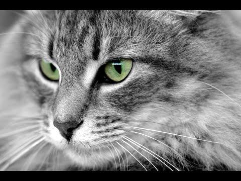 Los Increíbles Poderes Ocultos De Los Animales