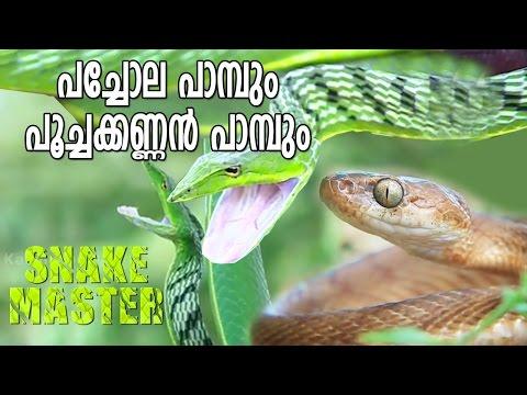 Vava Suresh Caught a Green Tree Snake & Cat Snake | Snake Master