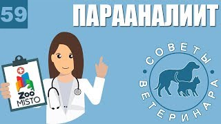 Парааналиит у животных | Лечение парааналиита | Причины возникновения болезни | Советы Ветеринара
