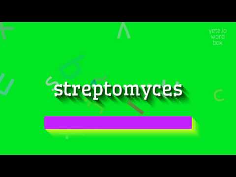 "How to say ""streptomyces""! (High Quality Voices)"