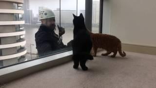 猫好きな「窓ふきおじさん」、仕事そっちのけで猫と遊びまくり