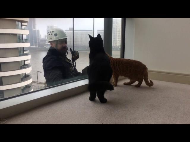 愛猫ギネスと窓拭きおじさん②⑧