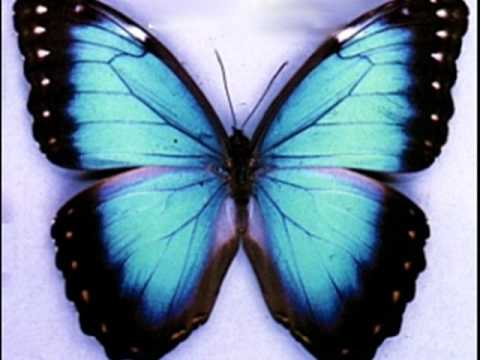 in a gadda da vida-ironbutterfly (FULL SONG)