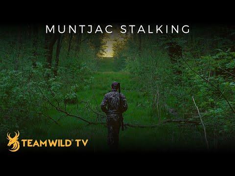 Muntjac Stalking in Northamptonshire