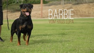 THE CALIFORNIA ROTTWEILER THAT SHOCKED THE GERMANS AT 2015 NATIONAL SEIGER SHOW