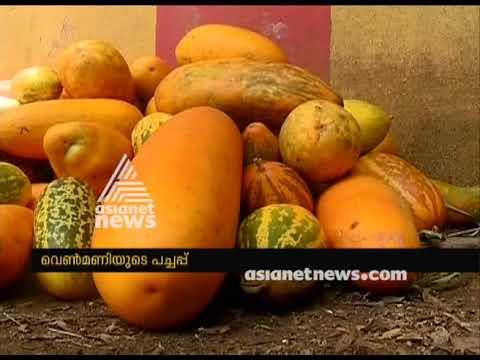 Organic vegetable farming at Venmani Village facing crisis