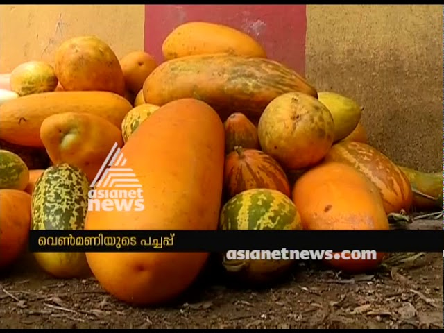 Organic vegetable farming at Venmani Village facing crisis