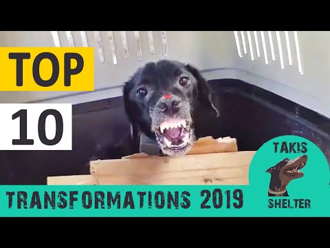 Top 10 most amazing animal rescue transformations of 2019 - Takis Shelter