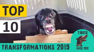 Top 10 most amazing animal rescue transformations of 2019  Takis Shelter