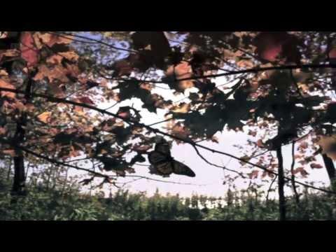 CARL SAGAN - Quem fala pela Terra? (Legendado)