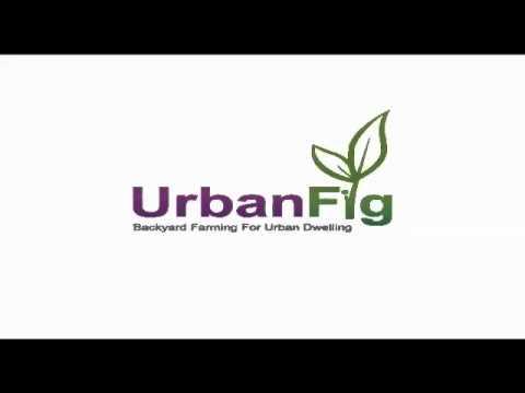 UrbanFig Chip Taylor Interview Monarch Butterflies