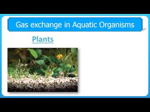Gaseous Exchange in Aquatic v Terrestrial Organisms